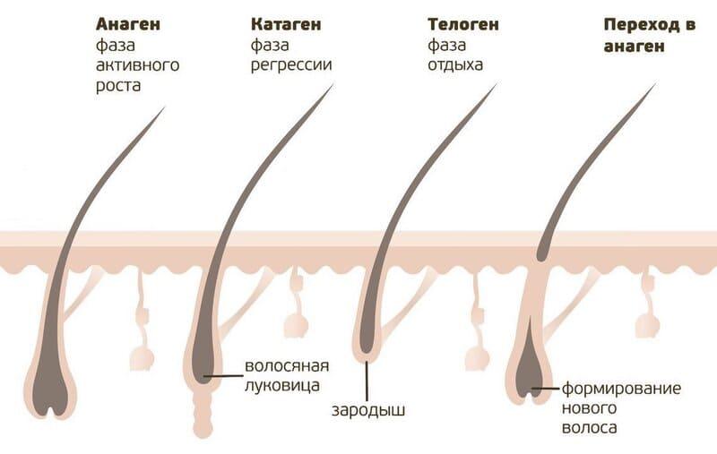 Как поддерживать здоровье волос?